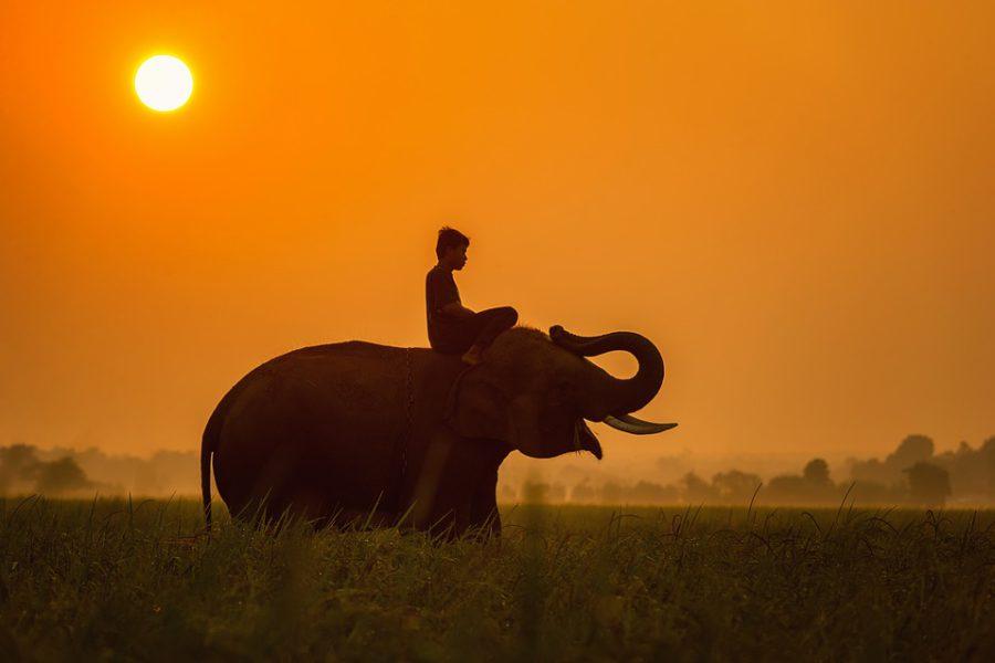 Un séjour écologique en Tanzanie pour une virée pleine de découvertes