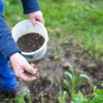 Diverses façons d'entretenir les plantes de son jardin