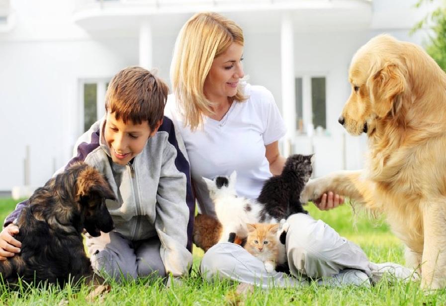 Les animaux domestiques dans la prospection et la publicité