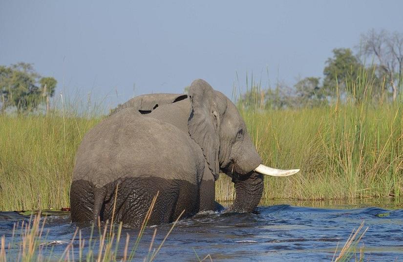 Chobe et l'Okavango : deux sites incontournables pour un safari au Botswana